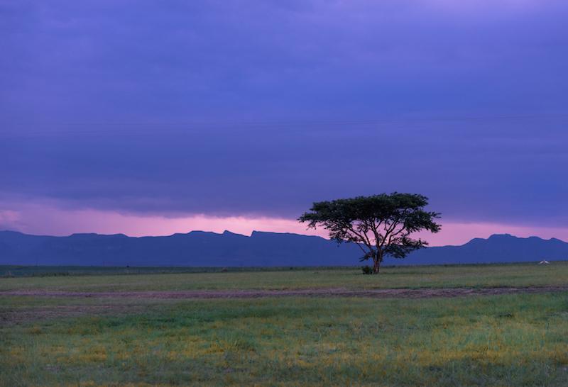 Drakensberg tree south africa