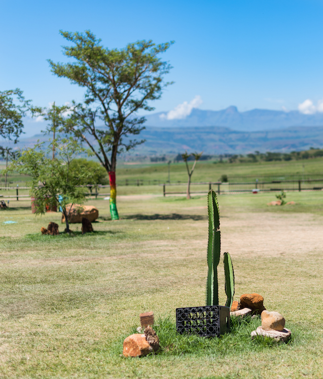 Cactus, Drakensberg, South Africa