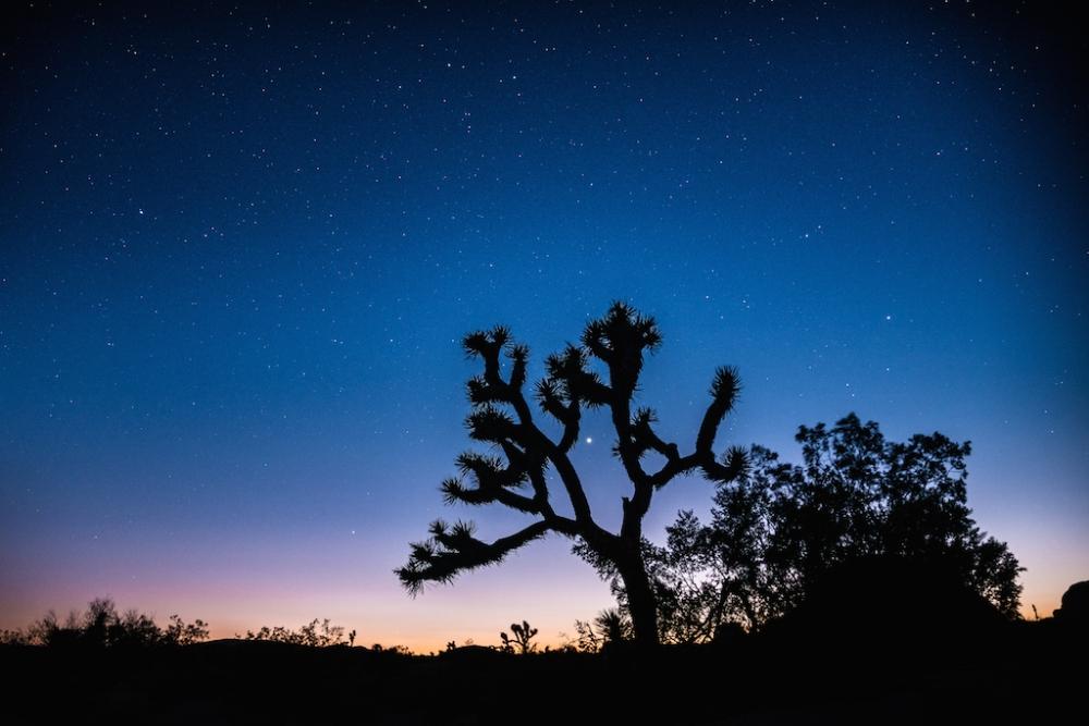 joshua tree nuit etoilee